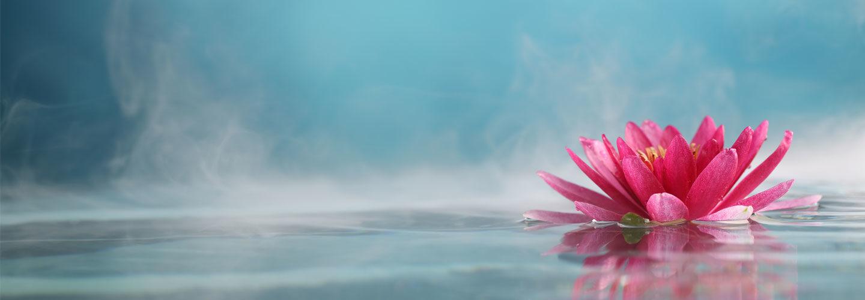 lotus symbolizing love, peace and harmony